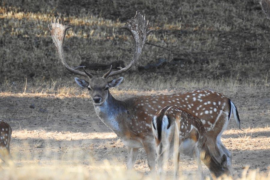 fallow hunting spain cadiz andalucia