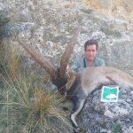Southeastern ibex